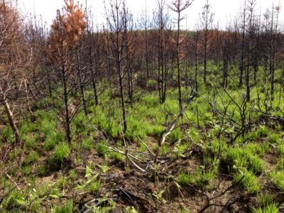 Group Forest Insurance Scheme
